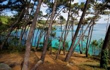 Paysage de L'ile Vierge - Saint - Henot