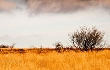 Savane des Monts-d'Arrées - Mais où sont les lions ?