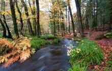 Huelgoat - La rivière d'argent, après la mare aux fées