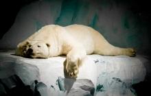 Brest - L'ours d'Océnaopolis (en peluche)