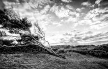 L'arbre penché du camping du Dossen