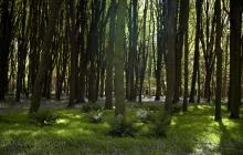 Bois du château de Kerjean